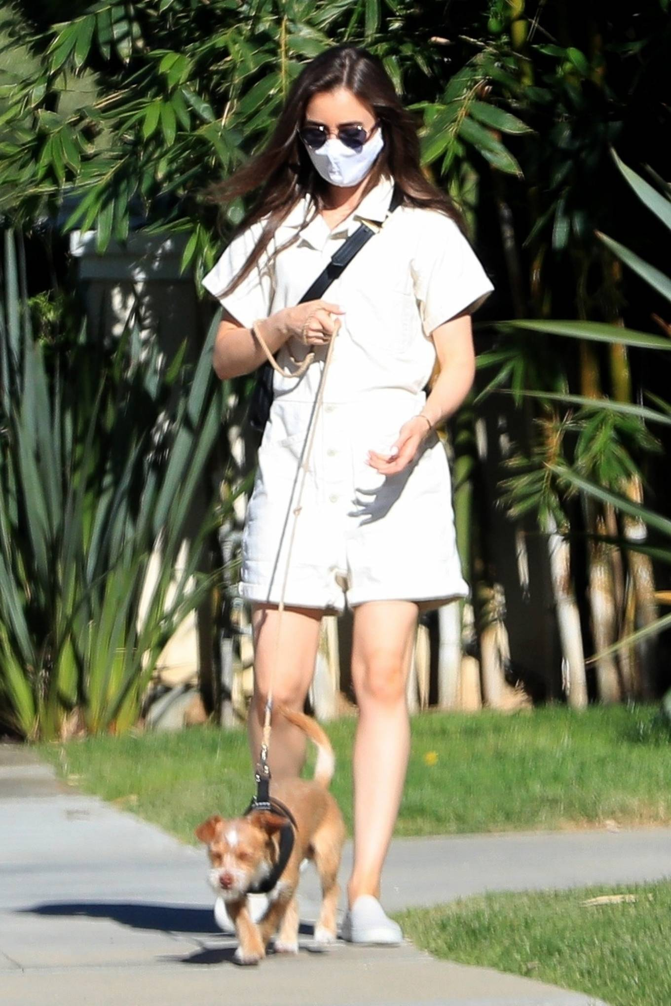 Lily Collins Out with her Dog in Beverly Hills