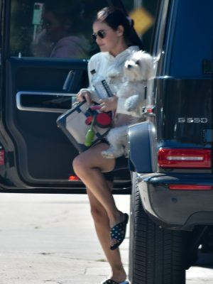 Lucy Hale Leggy with Dog, Visiting a Friend in Studio City
